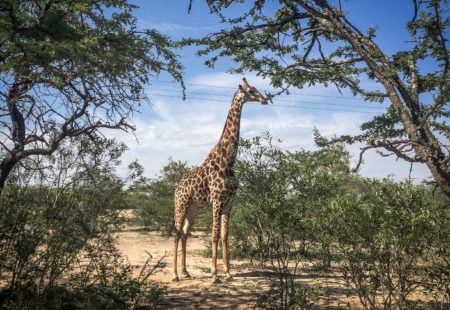 """<strong>3- What makes this tour different from your Cape Province tour?</strong>One of the biggest differences is that you get more chances to spot wildlife up close, not just in the game reserves but also in the large national parks, like <a href=""""https://hluhluwegamereserve.com/"""">Hluhluwe National Park</a> and <a href=""""http://www.krugerpark.co.za/"""">Kruger National Park</a>, which are among some of the most beautiful wildlife reserves in the world. Also, The Cape is unlike the rest of South Africa as it is strongly influenced by colonisation and the ever-present Dutch heritage. This second tour gives us a real feel for Africa and the opportunity to experience a change of scenery, another climate and a much richer mix of cultures. We are also exposed to the Zulu culture, the cradle of the country's history. What's more, crossing borders is an added bonus with this tour as you get to visit several countries on just one trip."""